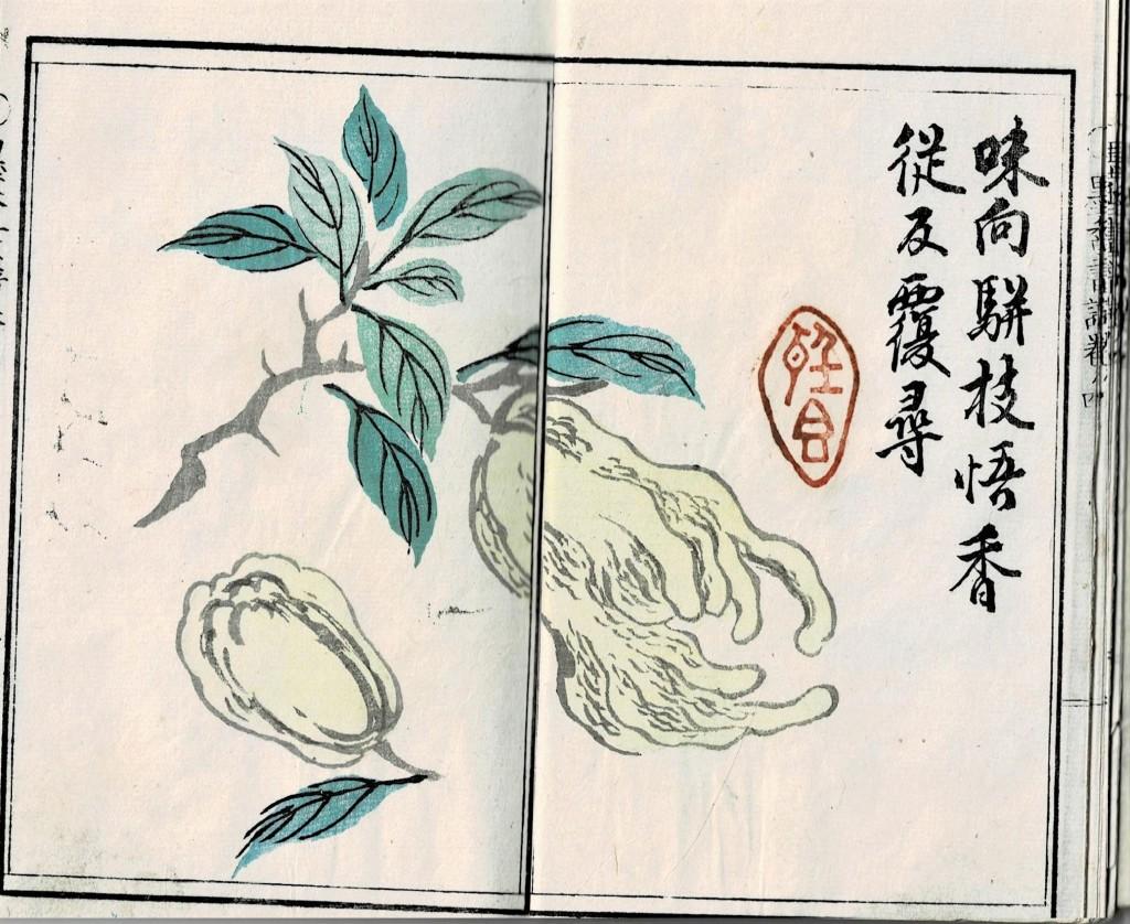 仏手柑(墨香画譜4)