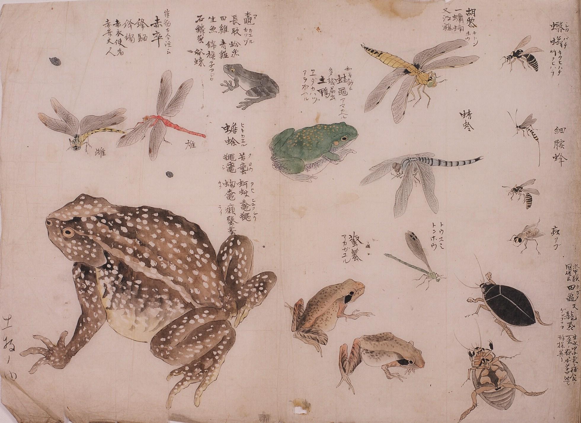 10:カエル、赤とんぼ、あぶ等