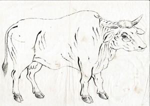 ●牛(下絵 墨)27.5x38.7